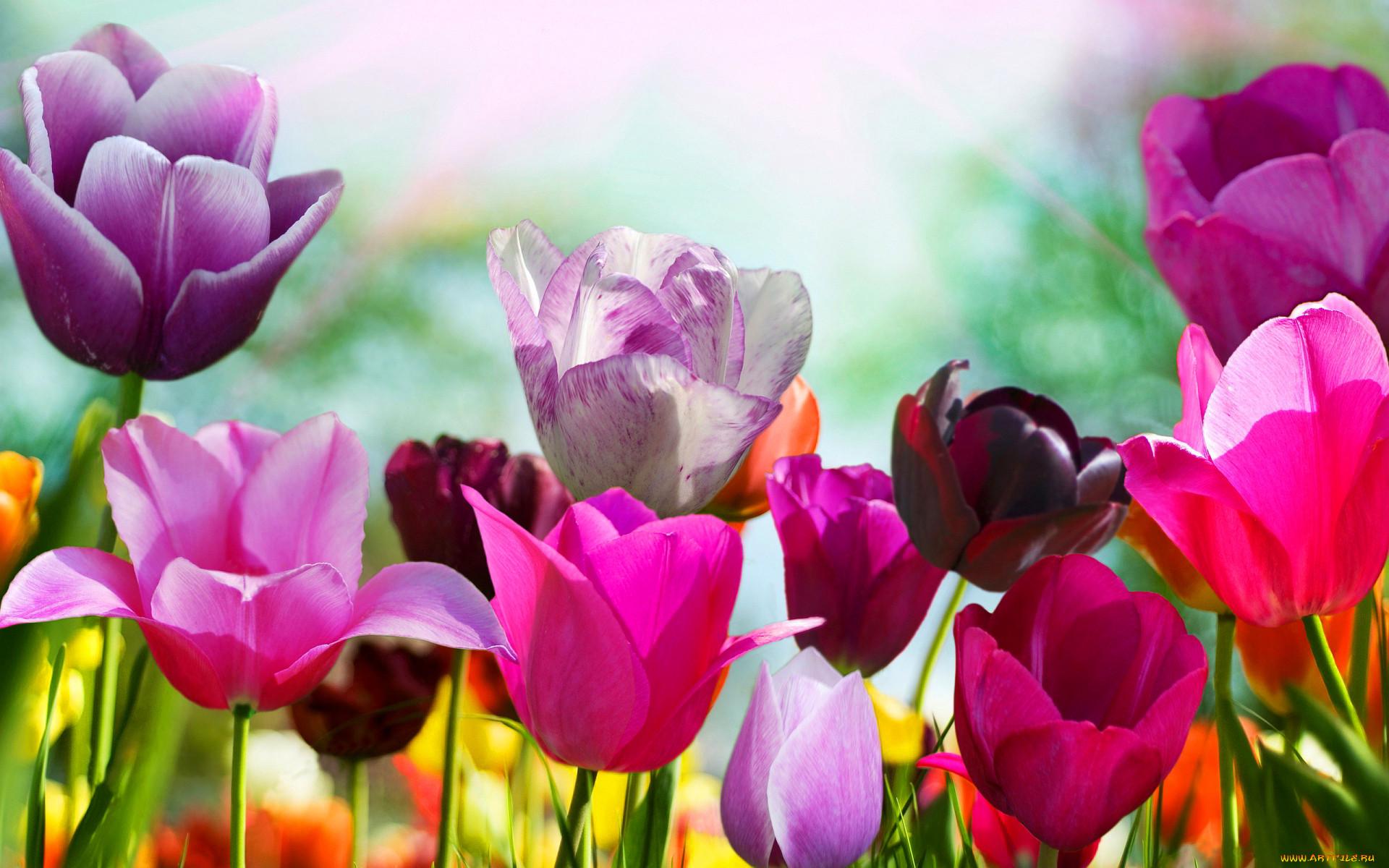 Сайт с картинками цветов